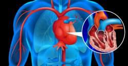 Viete, ako funguje krvný obeh a čo zabezpečujú jednotlivé cievy?