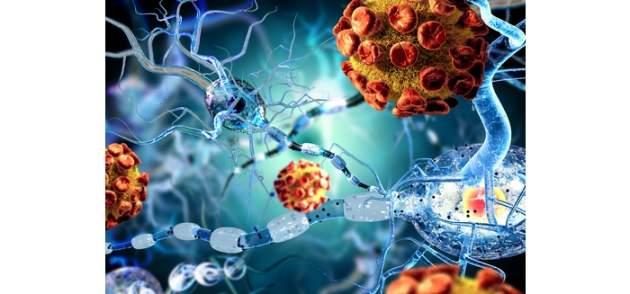 Ľudské bunky