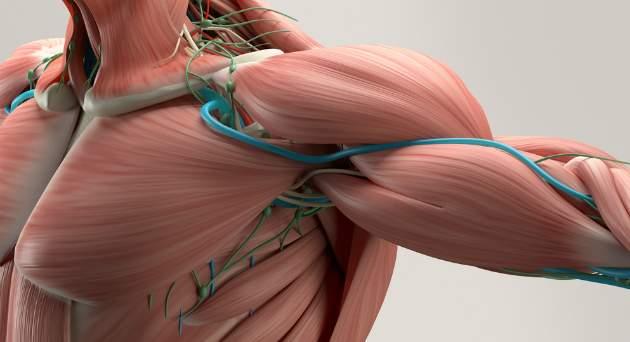 kostrové svaly