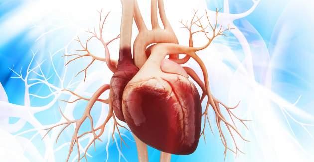 srdcový sval