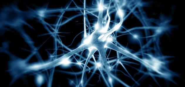 nervova_sustava_neuron