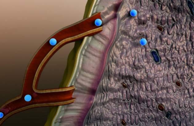 Hormóny v ľudskom tele 2