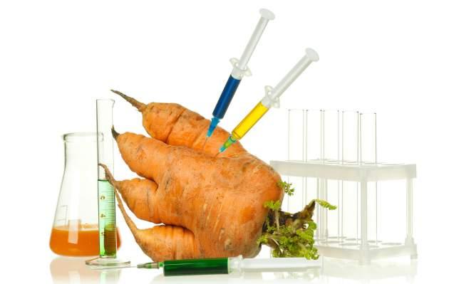 Geneticky modifikovaná mrkva