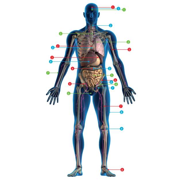 kmeňové bunky
