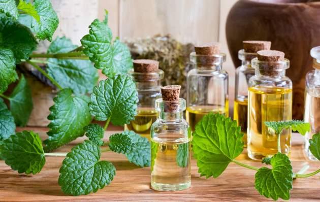 Medovka lekárska a produkty