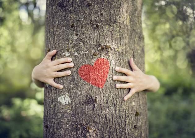 ochrana stromov