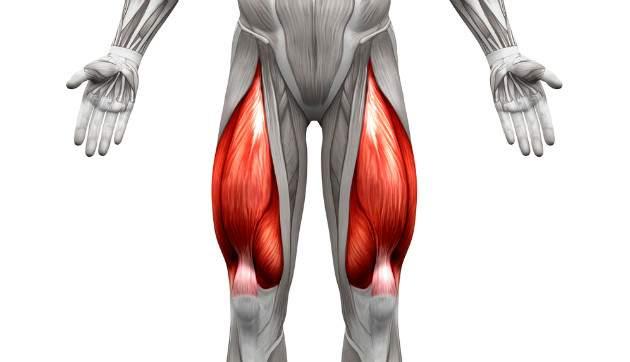 Štvorhlavý sval stehenný