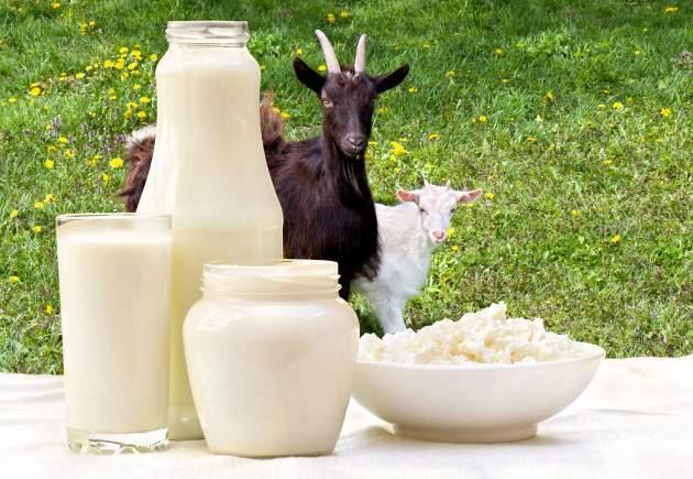 Kozie mlieko a mliečne výrobky