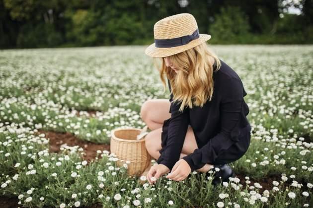 Pole harmančeka, ktoré pestuje spoločnosť Yves Rocher