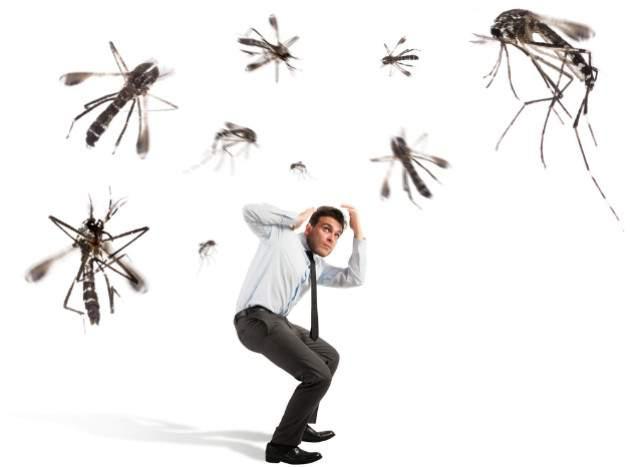 Kalamita komárov
