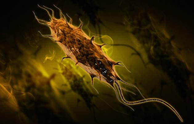 Baktéria E.coli
