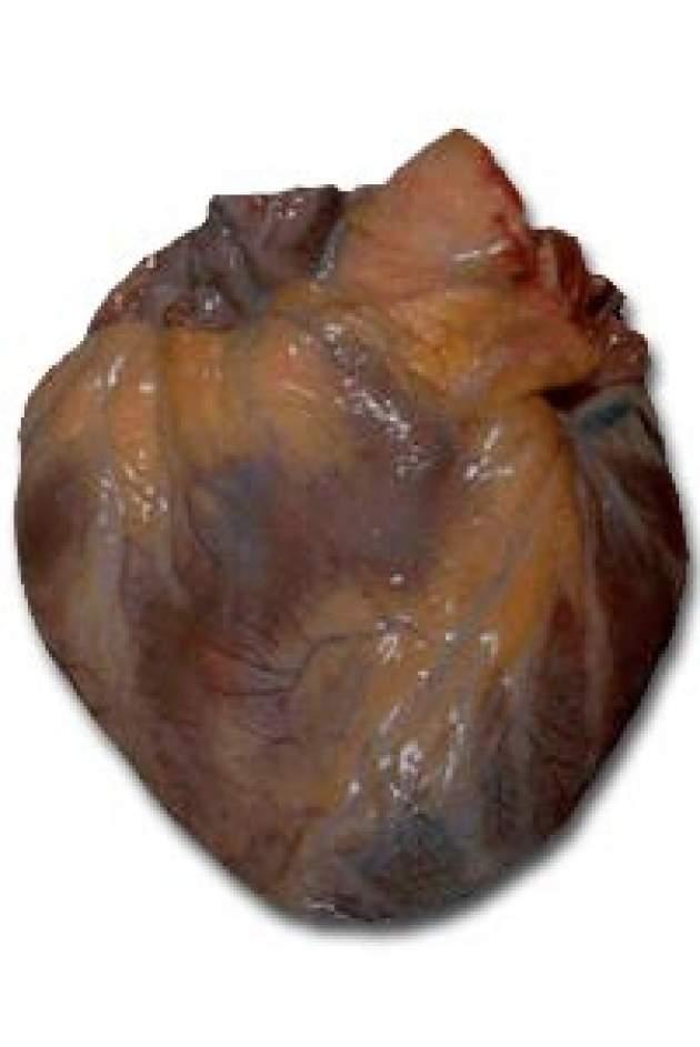 Srdce - fotografia