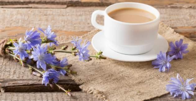 Cigoria káva