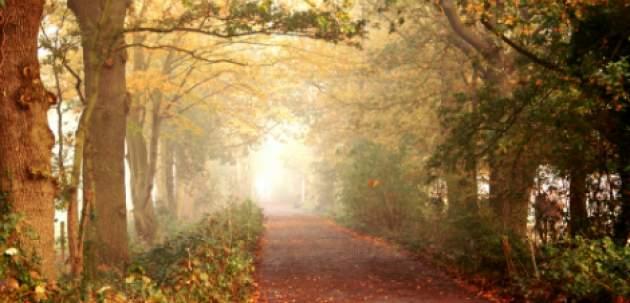 Cesta cez les
