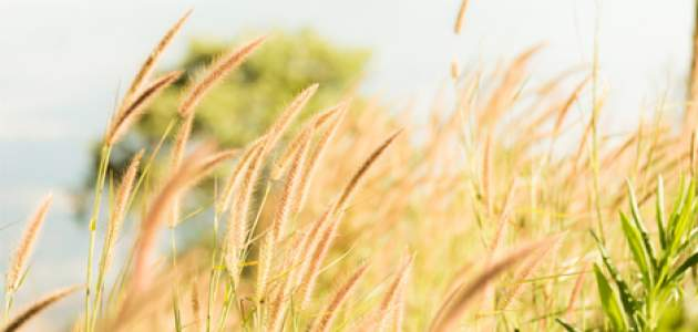 Nad celým Slovenskom je hlavne agresívny peľ lipnicovitých tráv