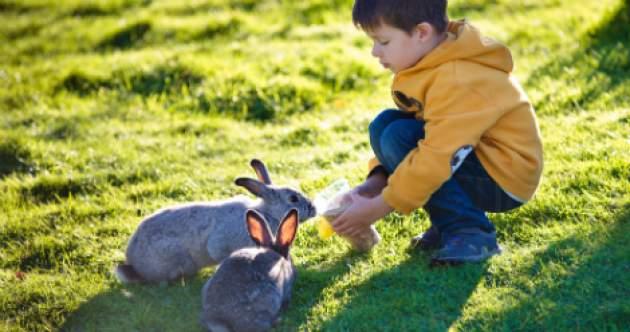 človek a zajac