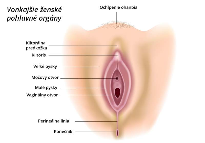 Vonkajšie ženské pohlavné orgány