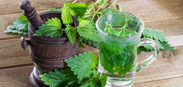 Nahraďte špenát pŕhľavou, pomôže aj pri liečení