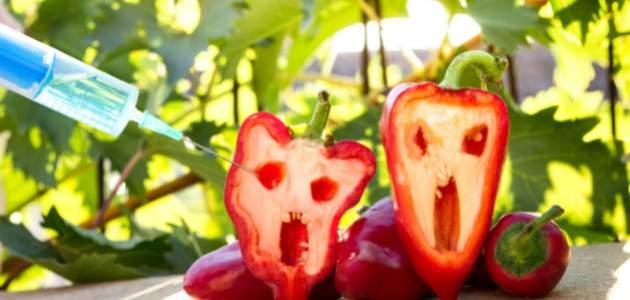 Potravinový škandál na Slovensku: GMO v najznámejšom kolovom výrobku?