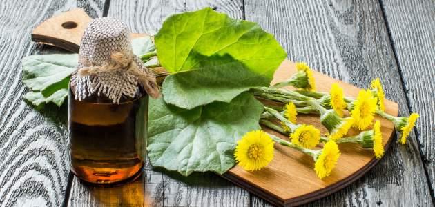 Cez víkend na bylinky - zbierajte podbeľ