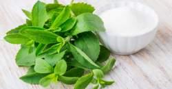 Stévia: prírodné sladidlo bez kalórií