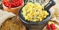 Čaj zo škandinávskej slamihy prospieva vnútorným orgánom a slúži ako detox
