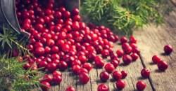 Brusnica - superpotravina, ktorá pomôže pri zápale močových ciest