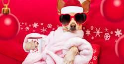 5 aktivít na rozhýbanie tela po Vianociach