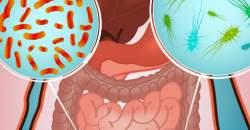 Viete, ako strava ovplyvňuje mikroorganizmy v našom tele? Pozrite si odbornú štúdiu