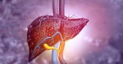 Pečeň - jeden z najodolnejších a najdôležitejších orgánov
