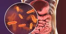Ochorenia tenkého čreva: infekcie, baktérie, ale i parazity...