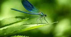 Vážky dokážu zjesť až 100 komárov za deň: ako ich prilákať na svoju záhradu?