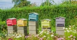 Apiterapia - keď včely liečia