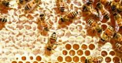 Vďačíme im za prežitie. Prečo treba pomáhať včelám?