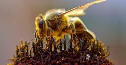 Úbytok včiel môže ohroziť potravinárstvo aj medicínu