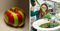 Vedci vyvinuli hybridné ovocie. Tieto jablká môžu zostať čerstvé po celý rok!
