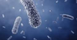 Ako obnoviť črevnú mikroflóru?