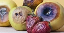 5 kľúčov k bezpečnejším potravinám
