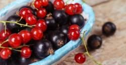 Červené alebo čierne? Ktoré ríbezle sú pre vás zdravšie?