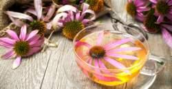 Echinacea vylieči prechladnutie a tinktúra z nej pomáha hojiť rany