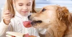 Fúj, čím (ne)kŕmiť domáce zviera v horúčavách?