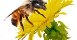 Alergia, Imunita
