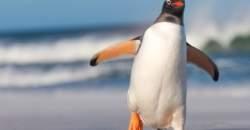Lekári radia ľuďom, aby sa na ľade pohybovali ako tučniaky
