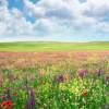 Alergici, prichádza obdobie druhého kvitnutia tráv!