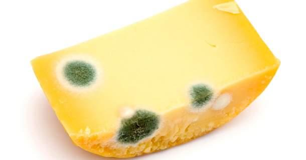 Čo robiť, ak sa na syre zjaví pleseň - odkrojiť alebo vyhodiť?