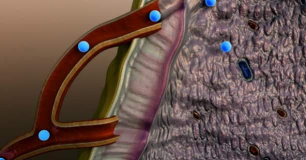 Hormóny v našom tele: poznáte ich funkciu? (2. časť)